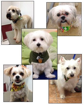 Dog Grooming - Fort Worth, Texas