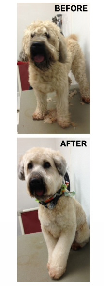 Dog Grooming Services - Fort Worth