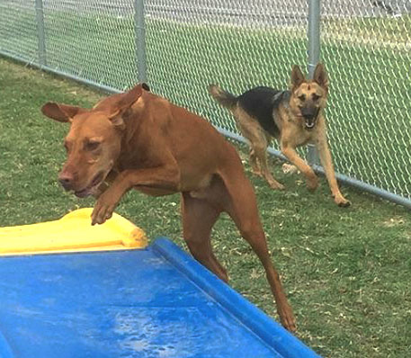 Doggie Daycare - Fort Worth, Texas