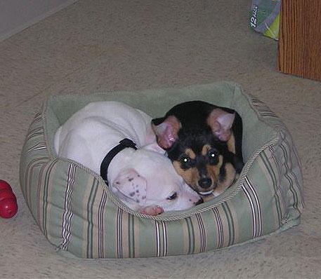 Doggie Playtime - Fort Worth, Texas