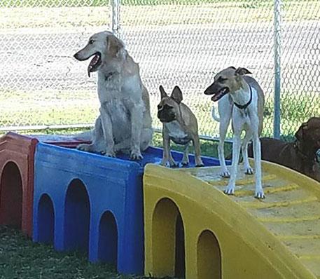 Dog Boarding - Fort Worth