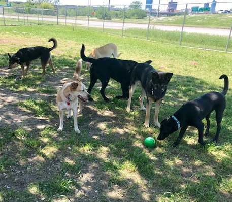 Doggie Daycare - Fort Worth