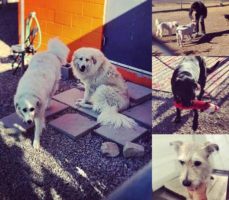 Doggie Daycare - Fort Worth